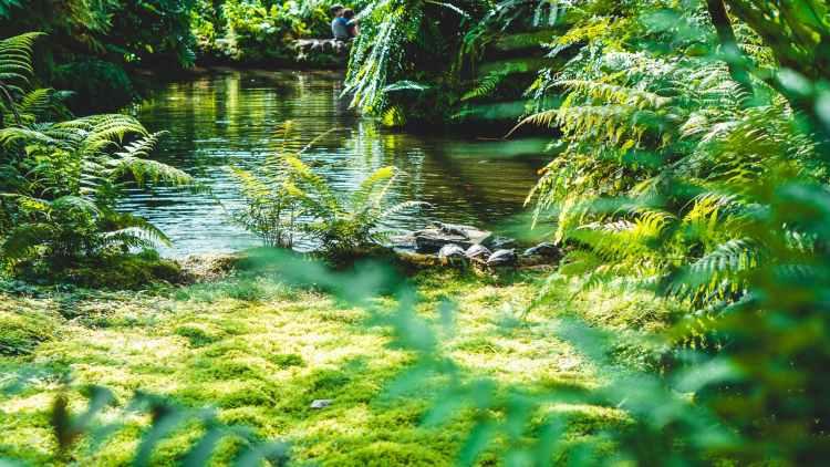 green ferns near body of water